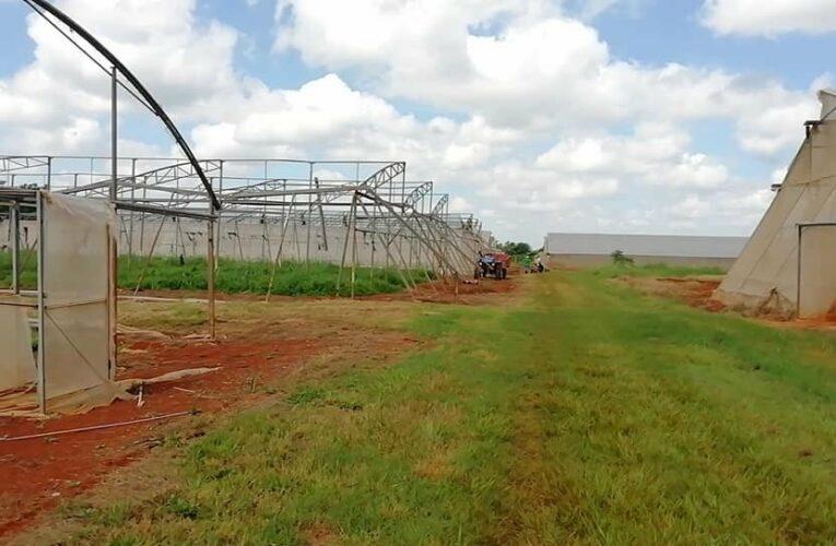 Mayabeque con grandes afectaciones en la agricultura por la tormenta tropical Elsa