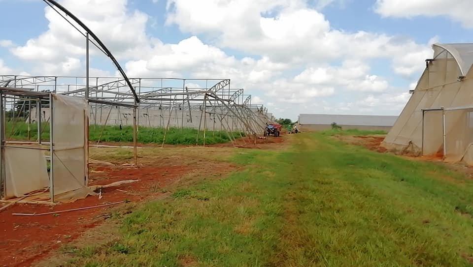 Mayabeque con grandes afectaciones en la agricultura por la tormenta tropical Elsa.