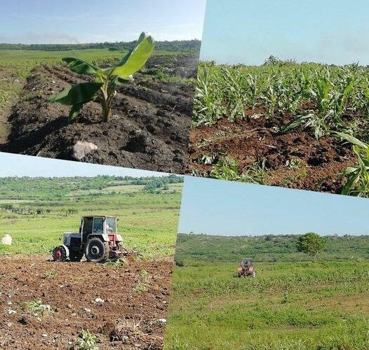 Por más rendimientos agrícolas
