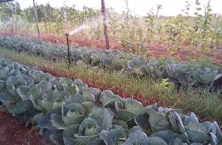 Incrementan resultados económicos en cooperativa agropecuaria de Güines