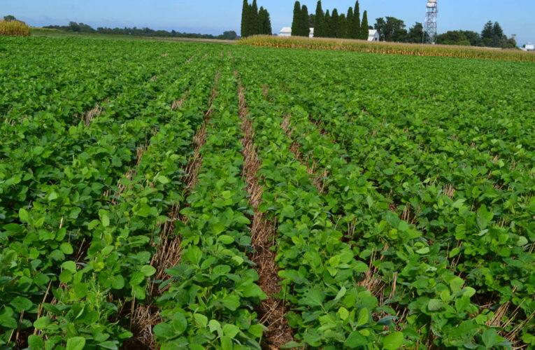 Recorre Valdés Mesa zonas agrícolas en Mayabeque