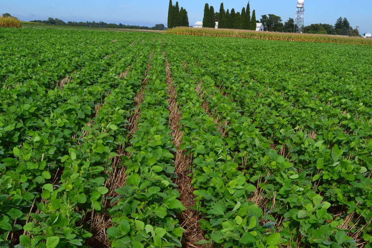 Recorre Valdés Mesa zonas agrícolas en Mayabeque.