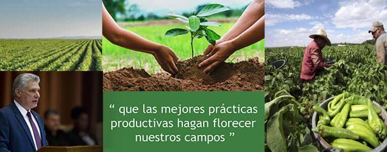 A favor de la producción de alimentos y la eficiencia económica (+ Audio)
