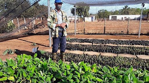 Trabajan en Mayabeque para potenciar la producción de semillas