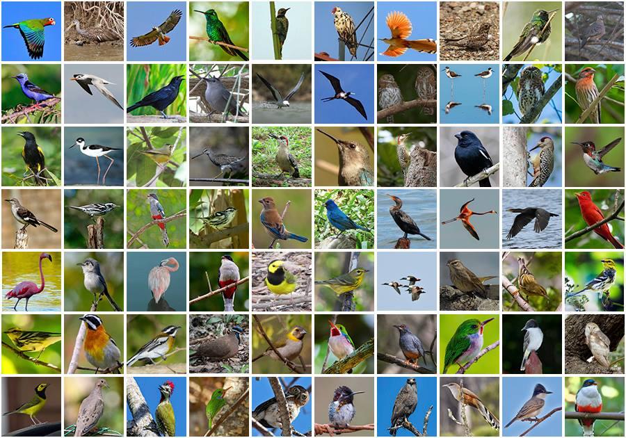 Birds of Cuba.