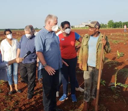 Díaz-Canel visita zonas agrícolas en Mayabeque