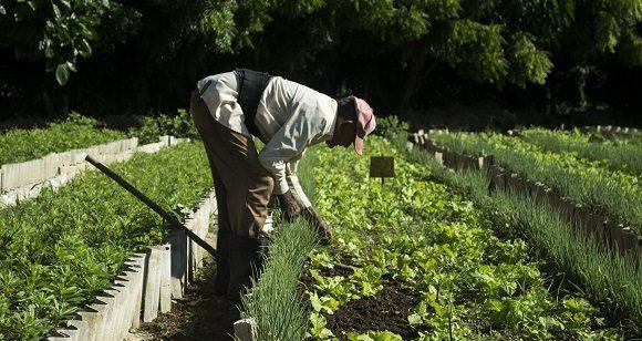 Cuba busca mayor eficiencia con polos productivos agropecuarios